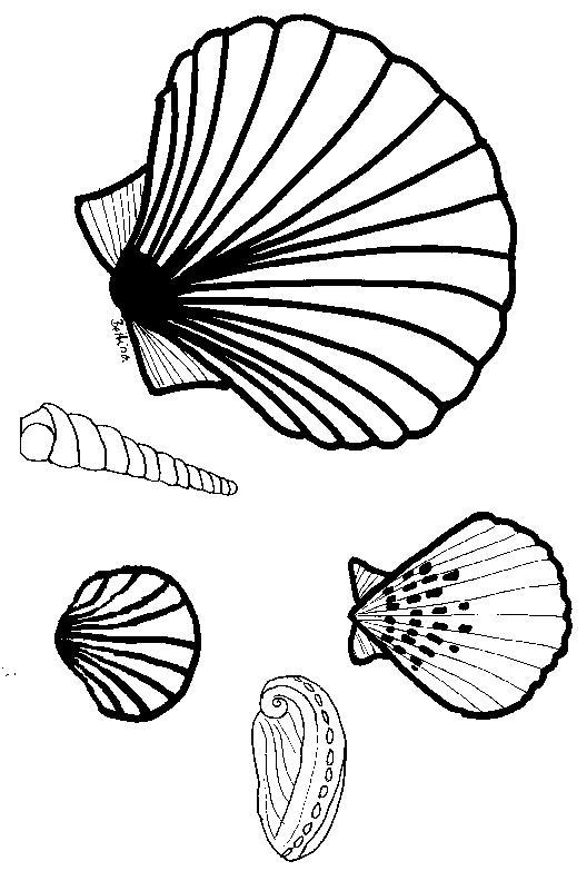 Muschel malvorlage  Muscheln